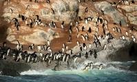 <h5>Antarctica_D4S5962</h5>