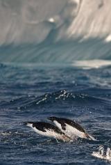 <h5>Antarctica_D4S6123</h5>