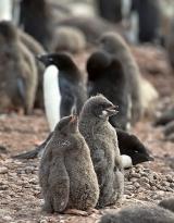 <h5>Antarctica_D4S6474</h5>