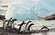 <h5>Antarctica_D4S6720</h5>