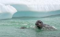 <h5>Antarctica_D4S8108</h5>