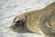 <h5>Antarctica_D4S7474</h5>