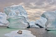 <h5>Antarctica_D4S8209</h5>
