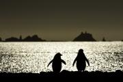 <h5>Antarctica_D4S7531</h5>