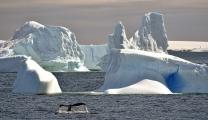 <h5>Antarctica_D4S8649</h5>