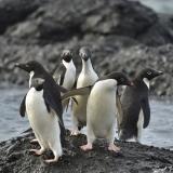 <h5>Antarctica-D4S6863</h5>