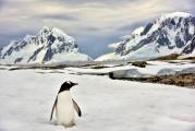 <h5>Antarctica-D816439</h5>