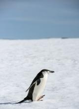 <h5>Antarctica-D808180</h5>