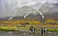 <h5>South-Georgia-King-Penguins-D813577</h5>