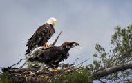 <h5>Eagles-5002924</h5>