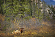 <h5>Elk-D4S3821</h5>