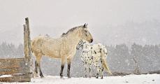 <h5>Horses-D4S6339</h5>