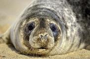 <h5>Seal-D809217-</h5>