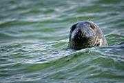 <h5>Seal-D809253</h5>