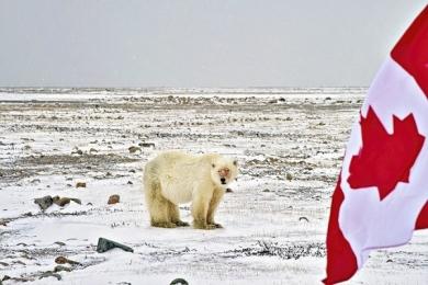 <h5>Arviat-Polar-Bear-0464-</h5>