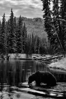 <h5>Bear-Cave_D819597</h5>