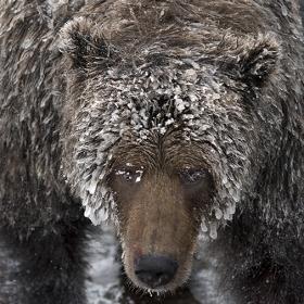 <h5>Bear-Cave-Mountain_D819927</h5>