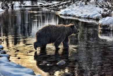 <h5>Ice-Bear-D819570</h5>