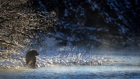 <h5>Ice-Bear-D4S6624</h5>