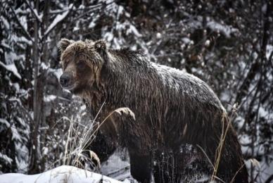 <h5>Ice-Bear-D819411</h5>