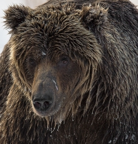 <h5>Ice-Grizzly-_D4S6174</h5>