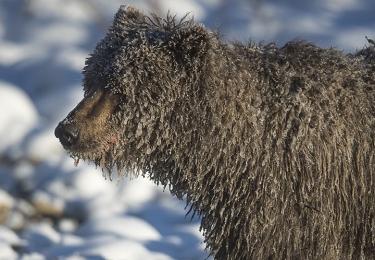 <h5>Sophie-the-Ice-Bear-D4S6706</h5>