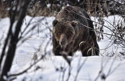 <h5>Stan-the-Man-Ice-Bear-D819662</h5>