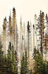 <h5>Banff-National-Park-Forest-Fire-D805282</h5>