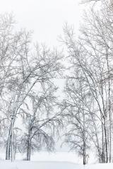 <h5>Winter-Wonderland-Ottawa-MV80377</h5>