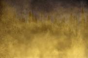 <h5>Yukon-Gold-Sunrise-D810070-e1451958245166.jpg</h5>