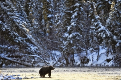 <h5>Ice-Bear-Early-Morning-D4S6260</h5>