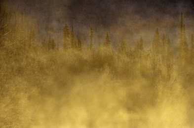 <h5>Yukon-Gold-Sunrise-D810070</h5>
