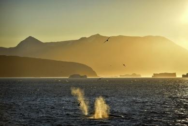 <h5>Karrat-Fjord-Humpback-at-Sunrise-D8122</h5>
