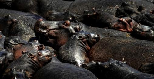 <h5>Masai-Hippos-Michelle-Valberg-e1451965250462.jpg</h5>