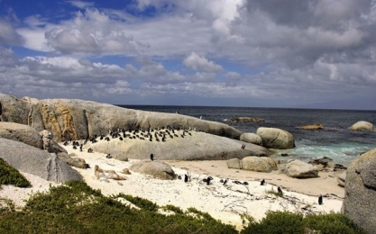 <h5>South-Africa-Jackass-Penguins-Colony-e1451965163765.jpg</h5>