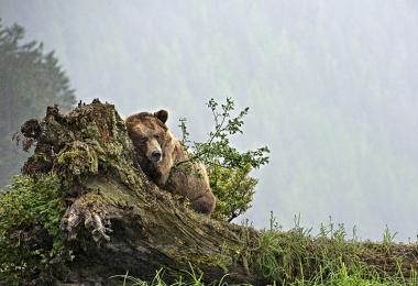 <h5>Khutz-Bear-D814726</h5>