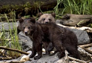 <h5>Khutz-Cubs-D4S1799</h5>