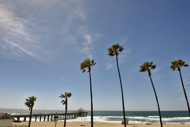 <h5>Manhattan Beach D822535 LA</h5>
