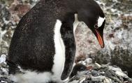 <h5>Antarctica D4S7203</h5>