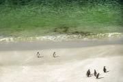 <h5>Falklands_D4S2769</h5>