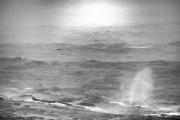 <h5>Humpbacks D4S3402</h5>
