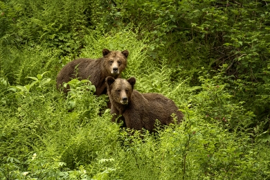<h5>Grizzly Siblings 0562w</h5>