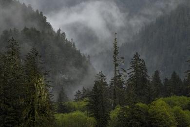 <h5>Great Bear Rainforest _D850624</h5>