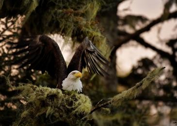 <h5>Eagle _D854403</h5>