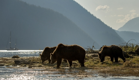 <h5>Grizzly Bears D521874</h5>