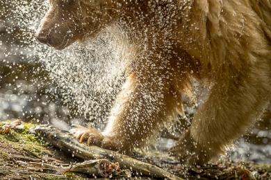 <h5>Spirit Bear D520982</h5>