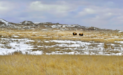 <h5>Grasslands National Park, Saskatchewan</h5>