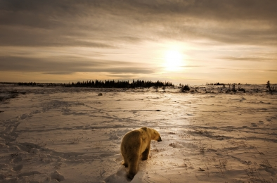 <h5>Polar Bear 5750</h5>