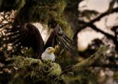 <h5>Eagle D854403</h5>