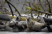<h5>Seals _D850834</h5>